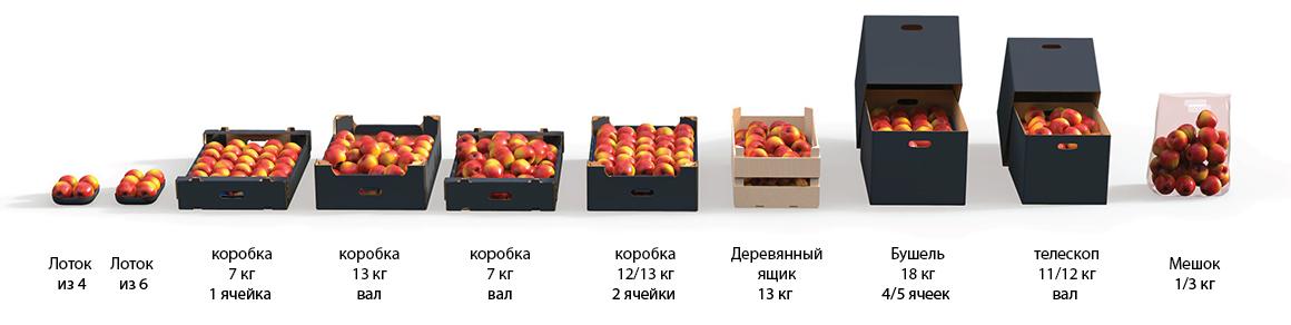 wfc jabłka-03